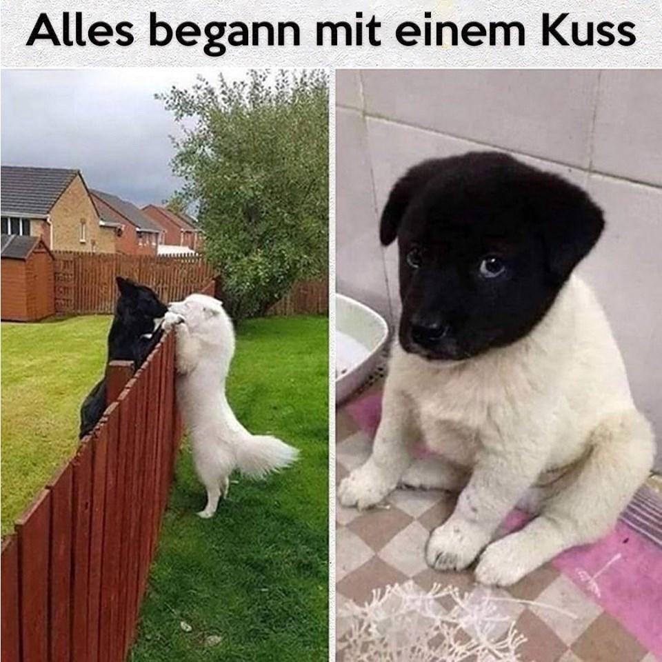 alles begann mit einem kuss hunde welpen schwarz und weiß