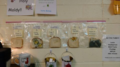 schulexperiment-zeigt-wie-wichtig-hände-waschen-ist-Courtesy-of-Jaralee-Annice-Metcalf